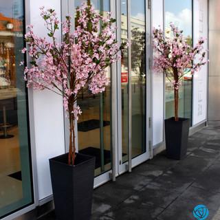 drzewka sztuczne przy witrynie