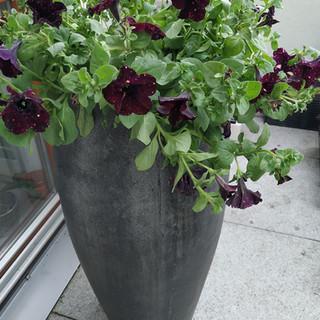 kwiaty na taras do biura