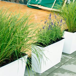 trawy w donicy