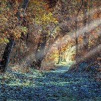 asimplepath_forest_goldlight.jpg