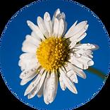 asimplepath_flower_reduced.png