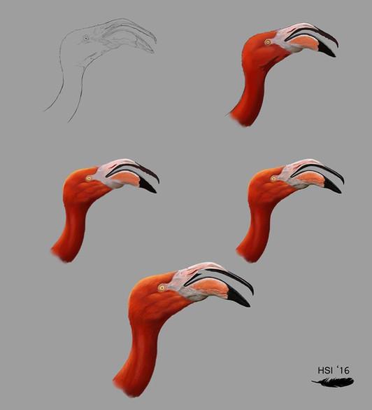 Phoenicopterus ruber proceso