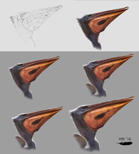 Pelecanus philippensis proceso