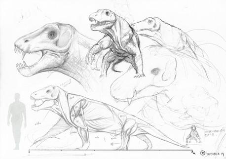 Estudio de Anteosaurus.jpg