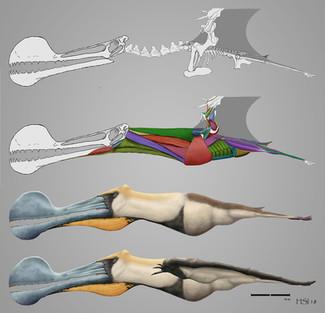Tropeognathus mesembrinus Reconstruction
