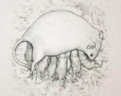 Nursing mouse dam