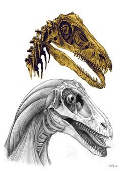 Deinonychus skull study