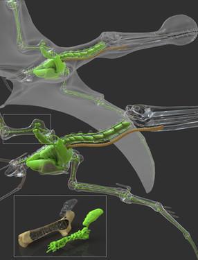 Neumaticidad en pterosaurios