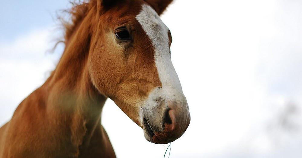 La carotte :  L'aliment pour lutter contre la rhinopneumonie des chevaux