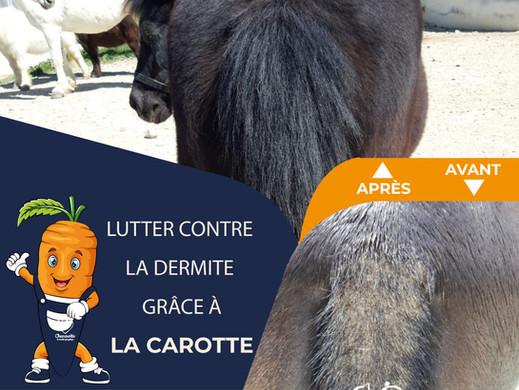 Comment lutter contre la dermite du cheval avec la carotte ?