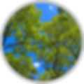 org-formation-rond-150x150.png