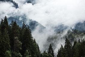 170901_Nature_Waldheim_M_Vikkisk_752A893