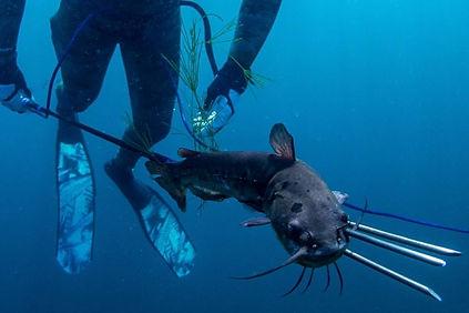 Catfish Cull pic.jpg