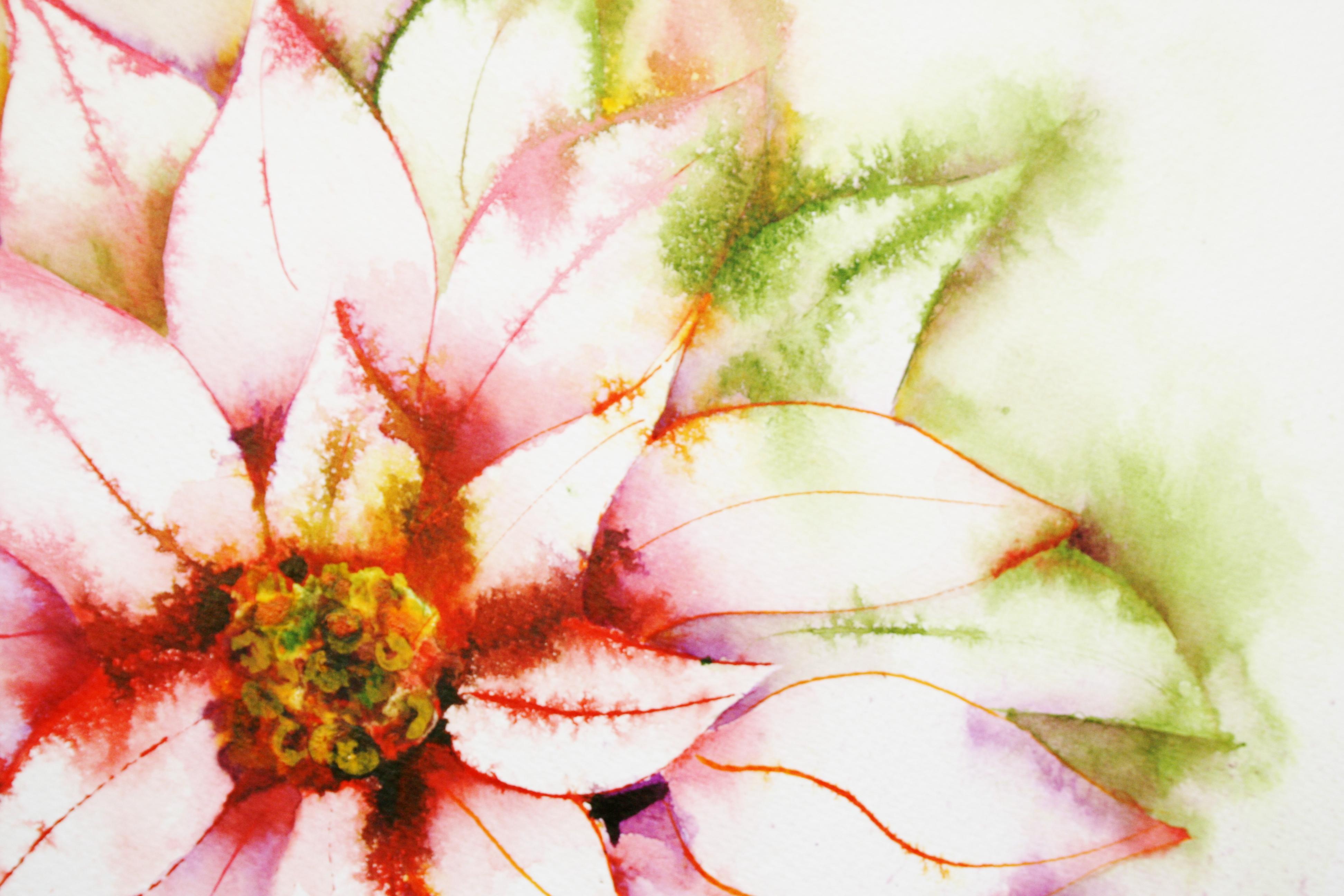 IMG_0540 Poinsettia