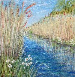 Quiet amongst the rushes