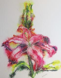 Luscious lily