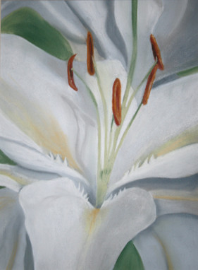 O'Keeffe lily