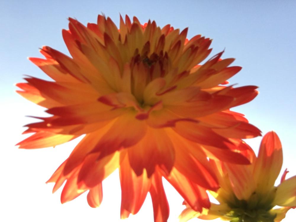 Flower. Floral Tribute. Funeral Celebrant