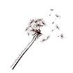 Dandelion Logo no background.png