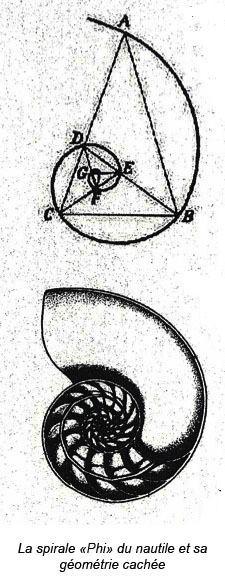 Spirale Phi, géométrie de la Nature