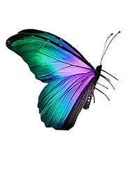 Butterfly (58)_edited.png
