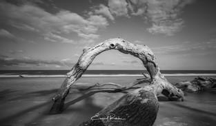 Seashore Arch