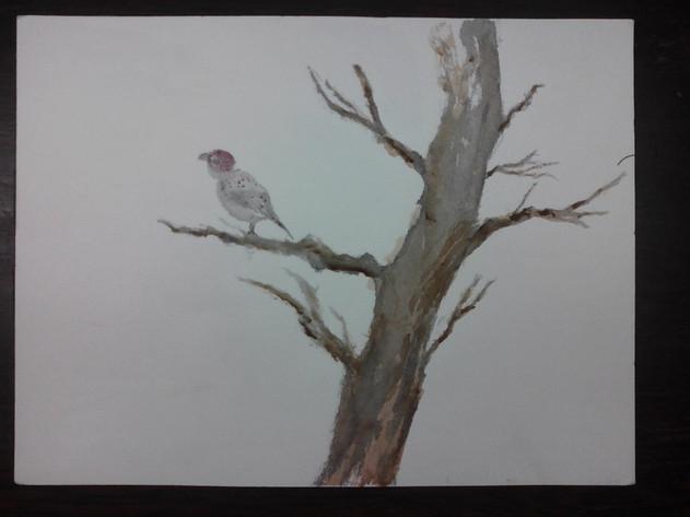 Bird in Tree