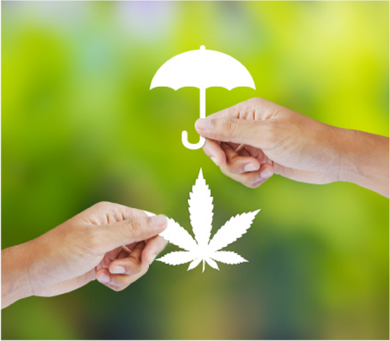 Admitted Insurance Carriers Are Here: Cannabis Buyers Beware