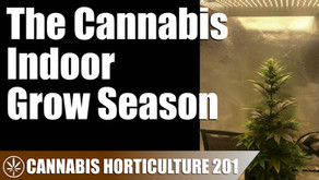 When to Grow Cannabis Indoors