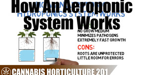How An Aeroponic Hydroponic System Works