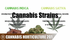 Differences Between the Varieties And Strains Of Weed