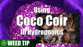 Using Coco Coir As A Hydroponic Grow Medium