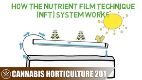 How a Nutrient Film Technique (NFT) Hydroponic System Works