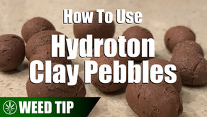 Using Hydroton Clay Pebbles As A Hydroponic Grow Medium