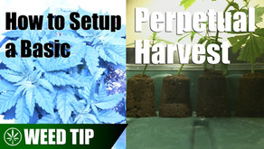 How to Setup a Basic Perpetual Harvest Indoors & Outdoors