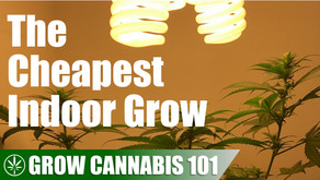 The Cheapest Grow Possible From Seed to Harvest