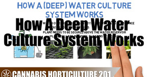 How A Deep Water Culture Hydroponic System Works