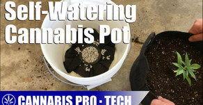 Building a Sub-Irrigated Planter for Growing Cannabis