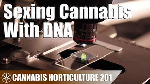 Cannabis Sex Identification with DNA