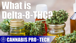 What is Delta-8-THC and the Legalities Behind the Popular Cannabinoid