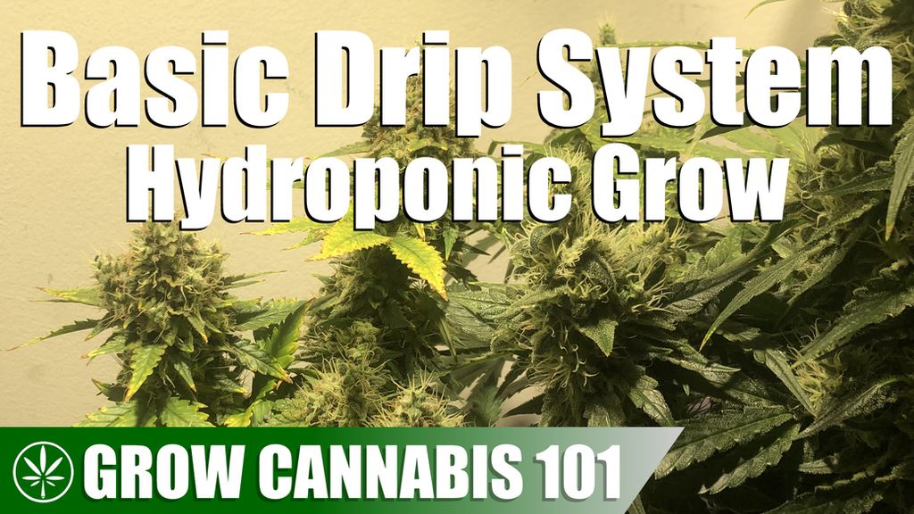 Grow Cannabis 101