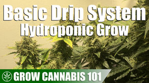 Drip System Hydroponics Timelapse Grow - Clone To Harvest