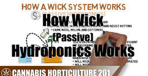 How A Wick Hydroponic System Works