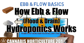How An Ebb & Flow Hydroponic System Works