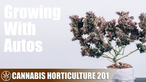 What Are Autoflowering Cannabis Plants?