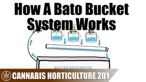 How a Bato Bucket Hydroponic System Works