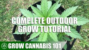 Outdoor Grow Setup and Tutorial