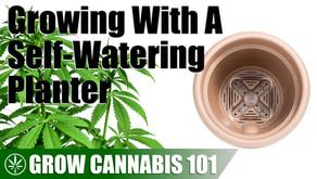 Self Watering Planter Pot Time Lapse Grow