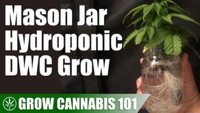 Mason Jar Water Culture Cannabis Timelapse Grow