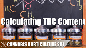 How to Calculate the THC Content in Cannabis